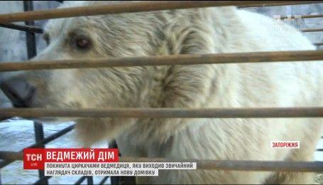 На Запорожье приютили медведицу Чади, которую бросили циркачи