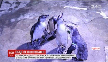 Відвідувачі індонезійського ресторану отримали змогу поїсти в компанії пінгвінів