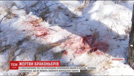 На Херсонщине браконьеры безжалостно убивают косуль