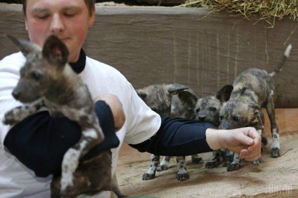 Найяскравіші фото дня: перші народжені в Україні гієнові собаки, тренування ізраїльських солдат