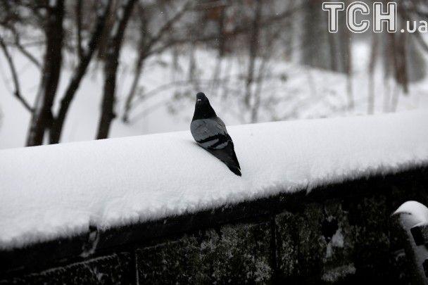 Нещадна негода у США. Снігу випало по коліна, а сильний вітрюган скинув із моста авто