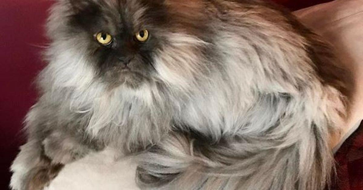 Ненависний кіт Джуно