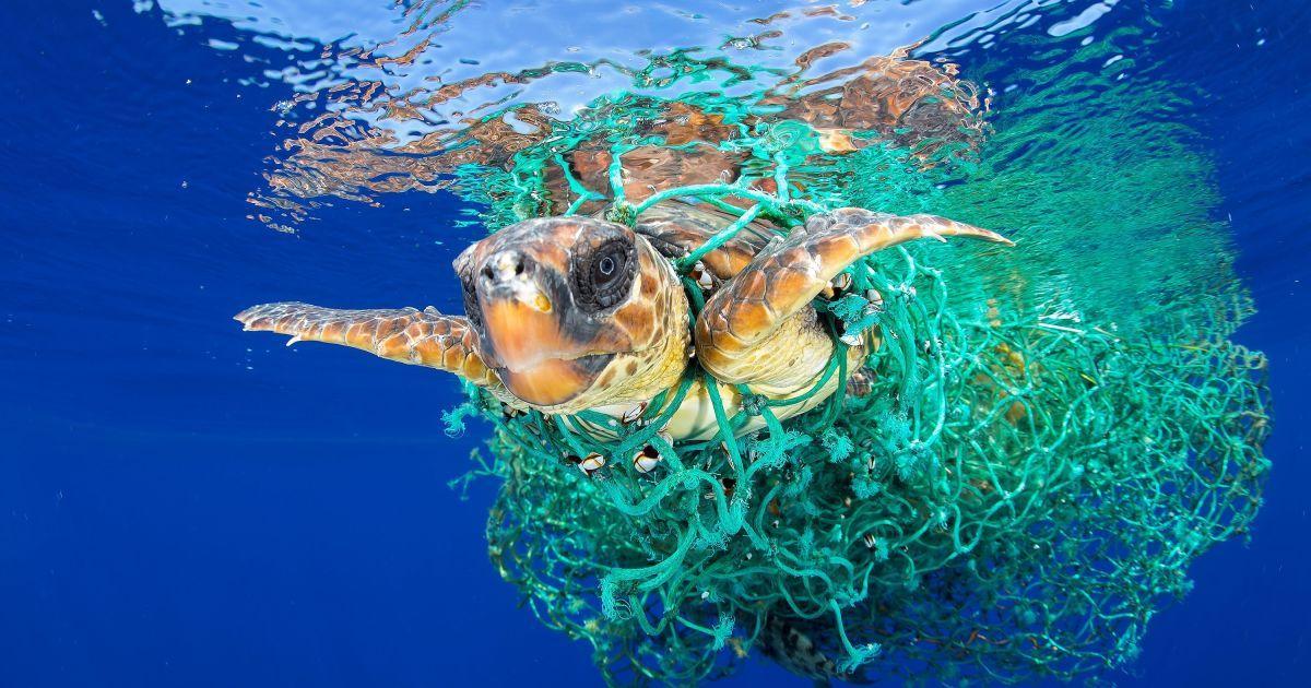 Категорія «Природа». головний приз. Франциск Перез, Іспанія - «Головата черепаха в пастці». Тенеріфе, Іспанія, червень 2016 року. Головаста черепаха заплуталася в рибальських сітях. @ Reuters