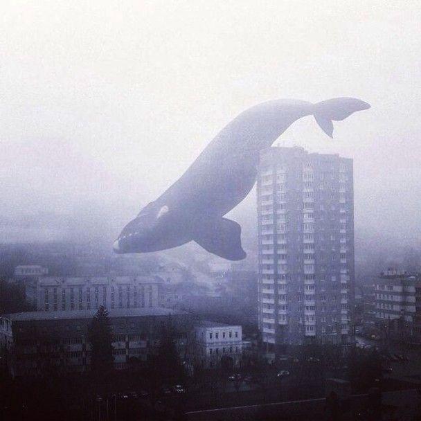 """Сині кити: у Луцьку небайдужі виявили підлітків, які вступили до """"груп смерті"""""""