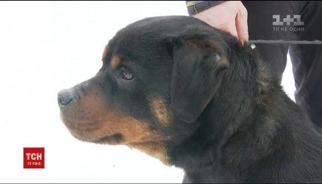 На Київщині ротвейлер врятував з пожежі жінку з двома дітьми і десяток собак
