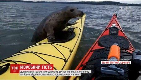 У Шотландії тюлень вирішив поплавати на байдарці із веслувальником