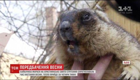 Львівський бабак зробив свій прогноз щодо приходу весни