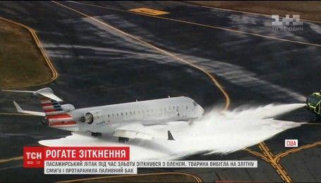 В США олень вывел из строя пассажирский самолет