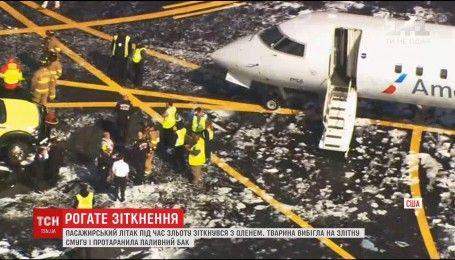 В США олень погиб от удара об пассажирский самолет при взлете
