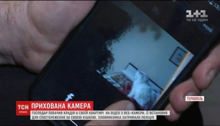В Тернополе мужчина поймал квартирного вора благодаря кошке