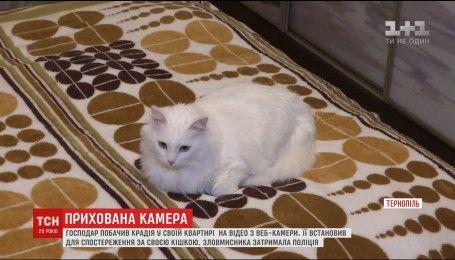 У Тернополі чоловік упіймав крадія, спостерігаючи за своєю кішкою через веб-камеру