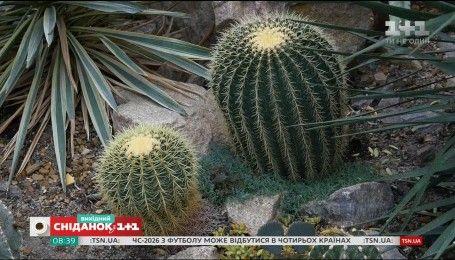 Як доглядати за кактусами - Садівництво для чайників