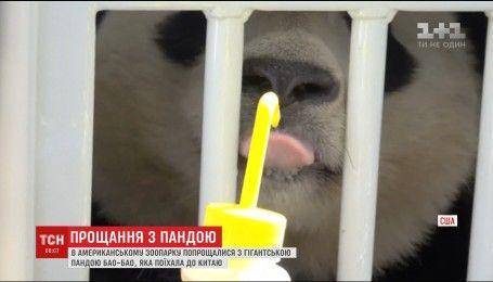 Трехлетняя панда Бао-Бао попрощались с посетителями и работниками американского зоопарка