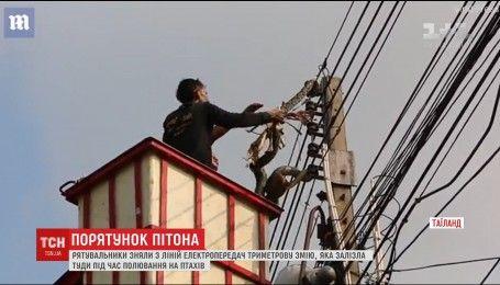 В Таиланде спасатели более 2 часов пытались снять 3-метрового питона с линии электропередач