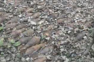 Грибники знайшли 238 мін (відео)