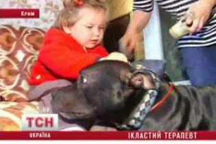 Собака навчили дитину ходити (відео)