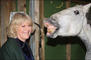 Герцогиня Корнуоллська показала зуби коню