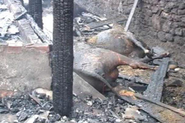 На Вінниччині на фермі живцем згоріло 40 корів і 12 свиней