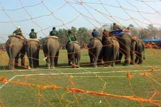 У Непалі визначили найкращих футболістів... серед слонів
