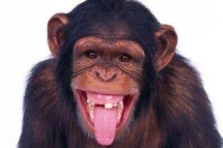 Мавпа вбила кокосом свого господаря