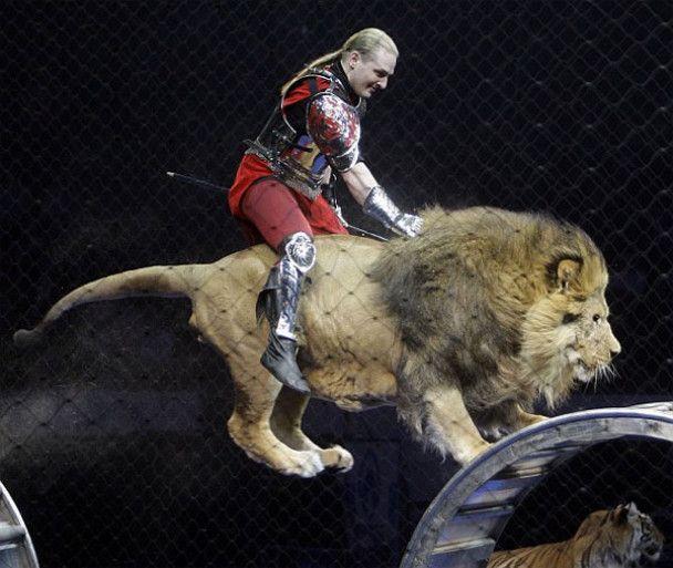 Рекордний стрибок верхи на леві