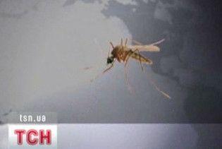 Дощова погода спричинила комариний бум