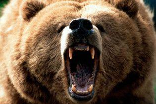 У Луганську на вулиці ведмідь розтерзав жінку
