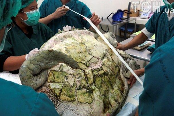 У Таїланді успішно прооперували черепаху, яка з'їла майже тисячу монет