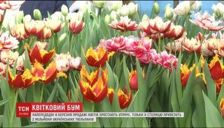 Цветочный бум: в столице за два дня собираются продать два миллиона тюльпанов