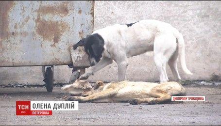 У Кривому Розі молоду матір ледь не розірвала зграя безпритульних псів