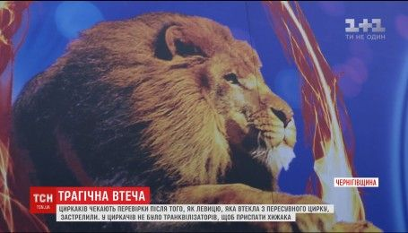 """Цирк """"Кобзов"""" чекають перевірки після вбивства левиці у Прилуках"""