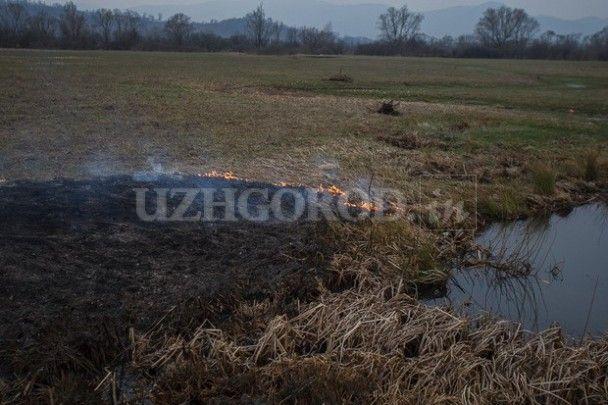 В уникальной Долине нарциссов на Закарпатье произошел пожар
