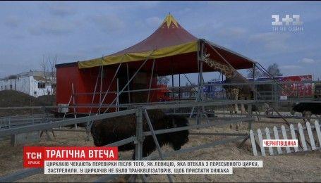 """Поліція з'ясовуватиме причини вбивства левиці цирку """"Кобзов"""""""