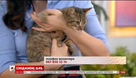 Маленькая кошечка Лиза ищет семью