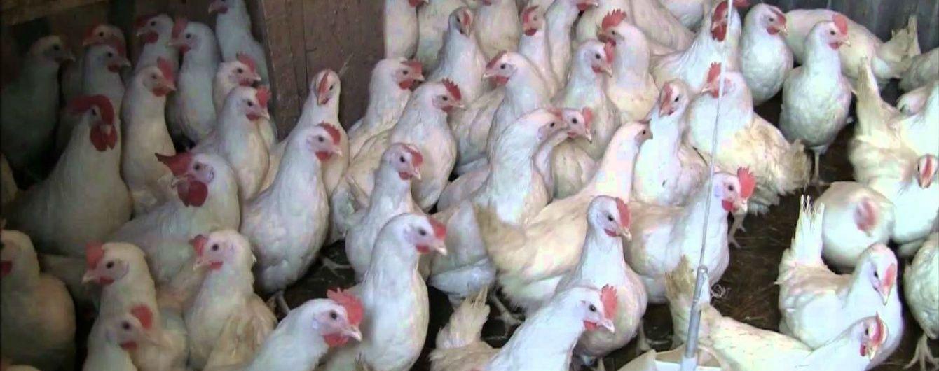 Ряд стран отказался от украинской курятины