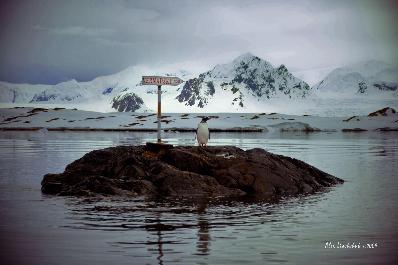 Антарктида_12