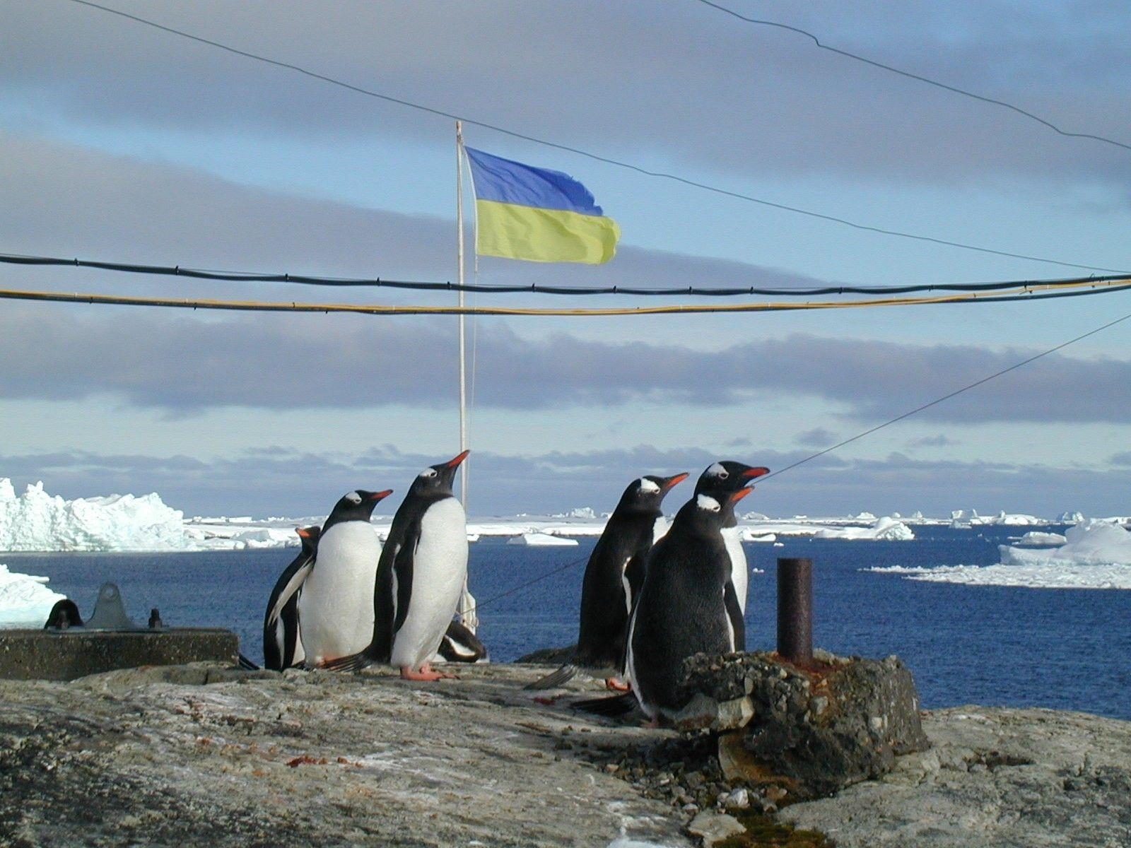 Антарктида_11