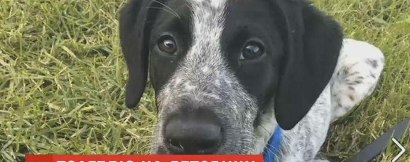 Убийство пса, который бегал по аэродрому в Новой Зеландии, вызвало международный скандал