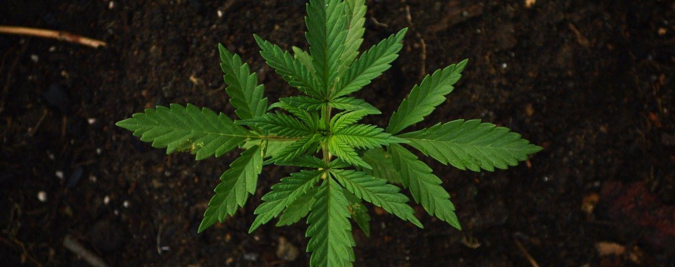 В Украине появится первый европейский центр по лечению марихуаной