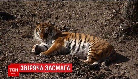 У київському зоопарку тварини вже вийшли в літні вольєри