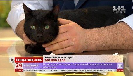 Котик Лео шукає люблячу і турботливу родину