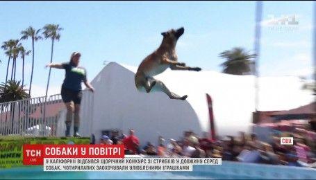 В США определяли, какая порода собак лучше прыгает в длину