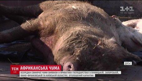 """"""" Госпотребслужба"""" зафиксировала очаги африканской чумы сразу в 4 регионах Украины"""