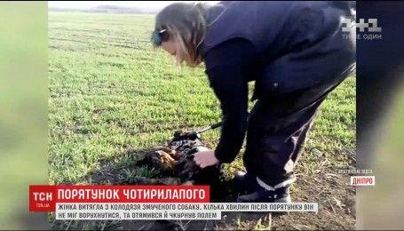 На Днепропетровщине женщина вытащила из колодца собаку