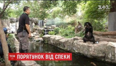 В зоопарке Бангкока чтобы спасти от жары животных, их кормят холодными фруктами