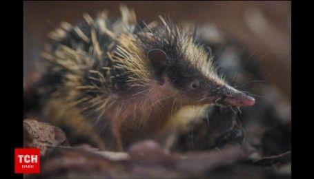 Нового необычного жителя показали в британском зоопарке