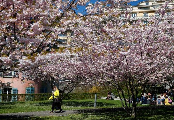 Заселфиться и зачекиниться. К цветущим сакурам в парках во всем мире потянулись тысячи людей