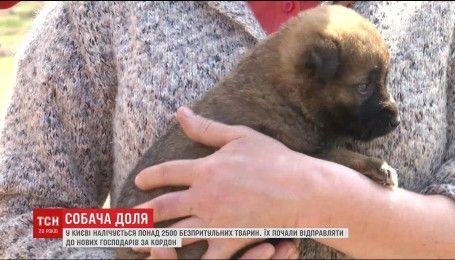 В Украине усилят ответственность за жестокое обращение с животными