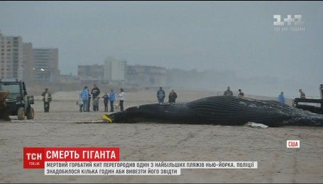 Мертвый горбатый кит перегородил побережьея Нью-Йорка