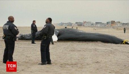 Огромного горбатого кита выбросило на побережье Нью-Йорка